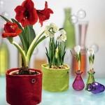jolies-plantes-fleuries-150x150