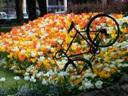 pic-poil-dans-les-fleurs-du-jardin-de-vienne-bis