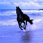 cheval.les-pieds-dans-leau-150x150 dans Non-sens