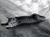 Mort de fatigue