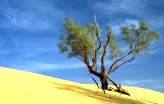 Sable et arbre de Tunisie