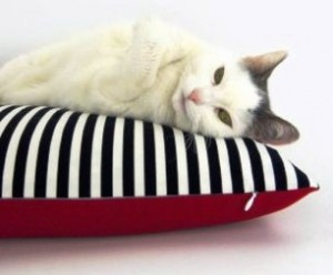 Coussin oreiller pour chat 2