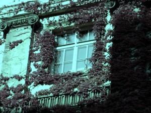 Fenêtre à Vienne