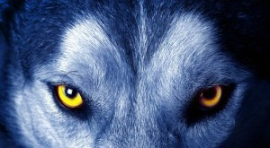 Gentil le loup