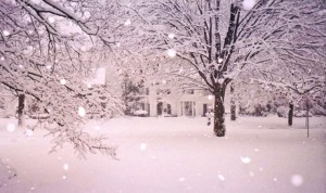 Neige en toutes saisons