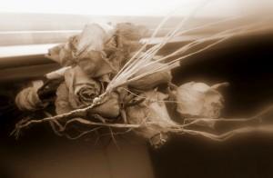 Roses de Lore