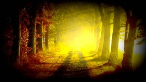 Au fin fond d'une forêt