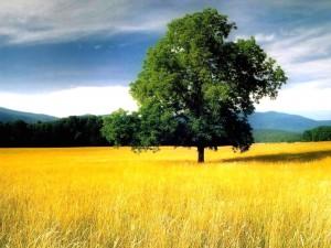 Plaine et prairie
