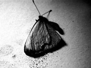 Le papillon de mort (by LaRoseDePetitPrince)