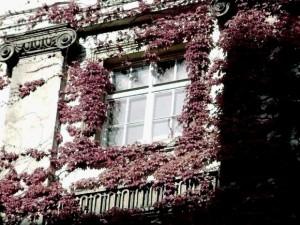 Fenêtre et vigne vierge