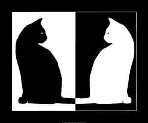 Chat noir, chat blanc