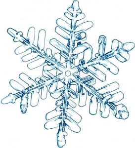 Étoile des neiges 1