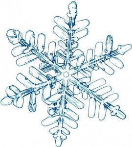 Étoile des neiges 3