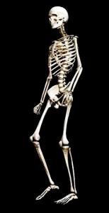 Squelette marchant