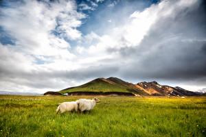 Islande (Le Routard)
