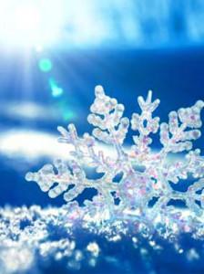 Étoile des neiges